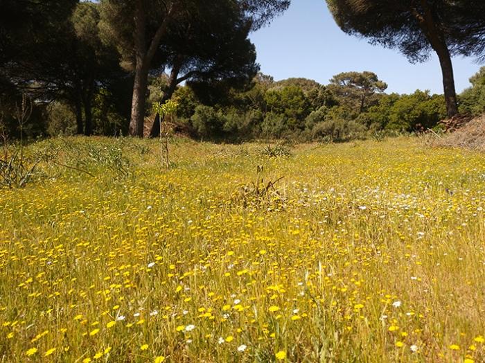 gelbe Blumenwiese